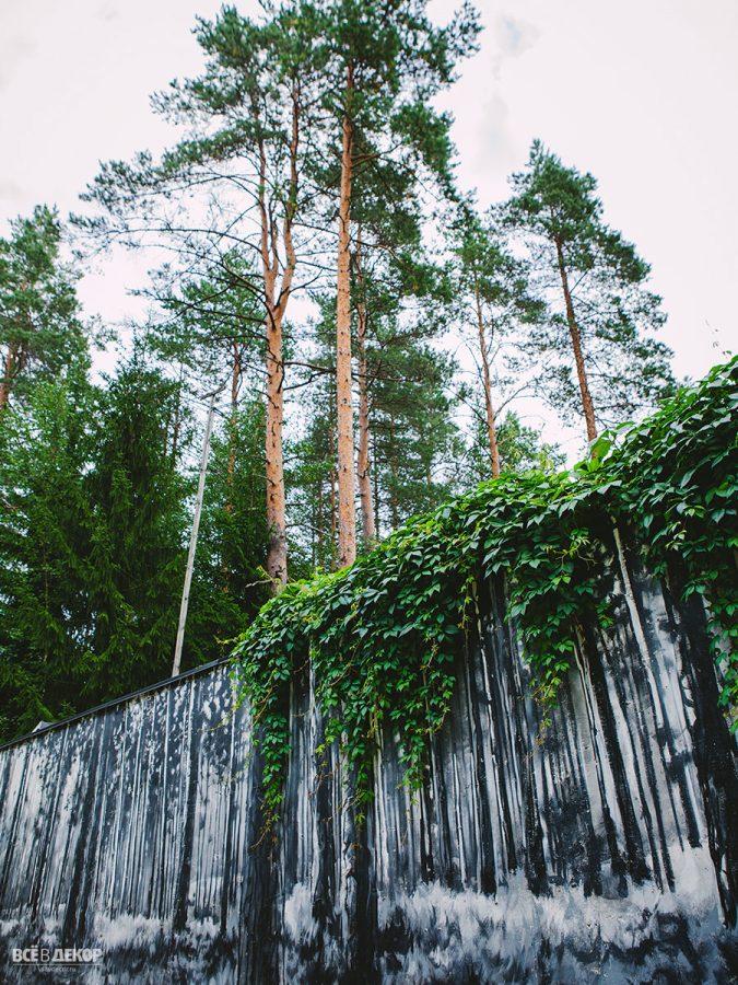 рисунок леса на заборе, граффити на заборе, роспись фасада пейзаж